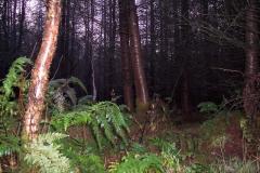 Cropton Forest 2012